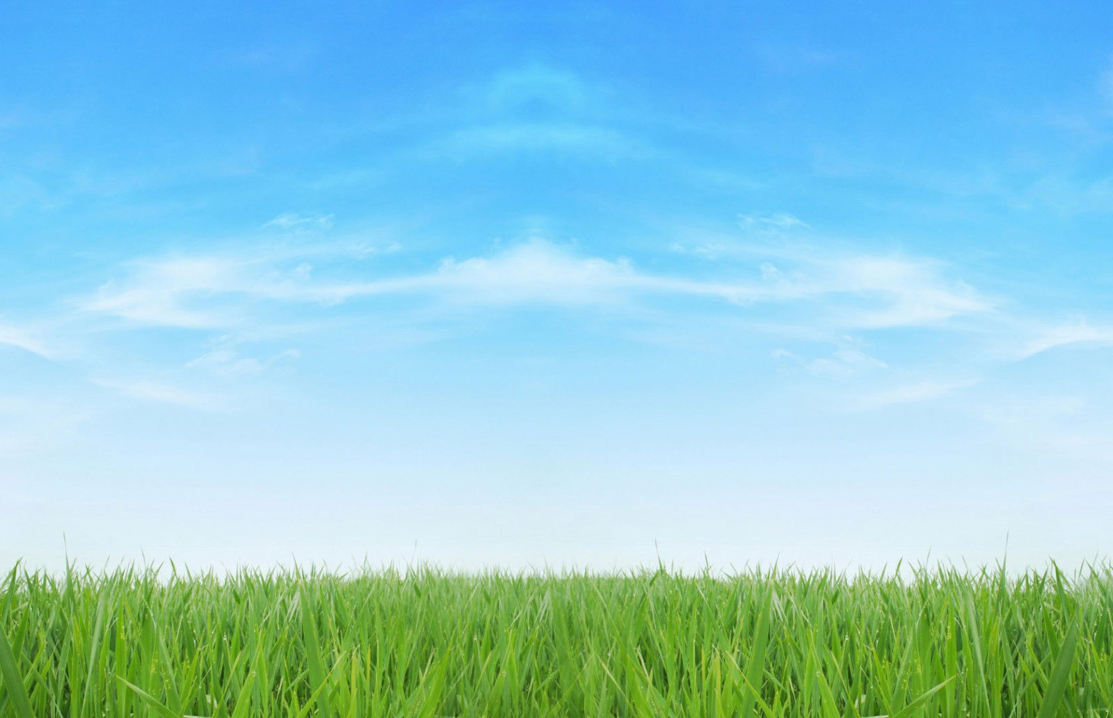 pest_control_sky_and_grass_bg_optimised